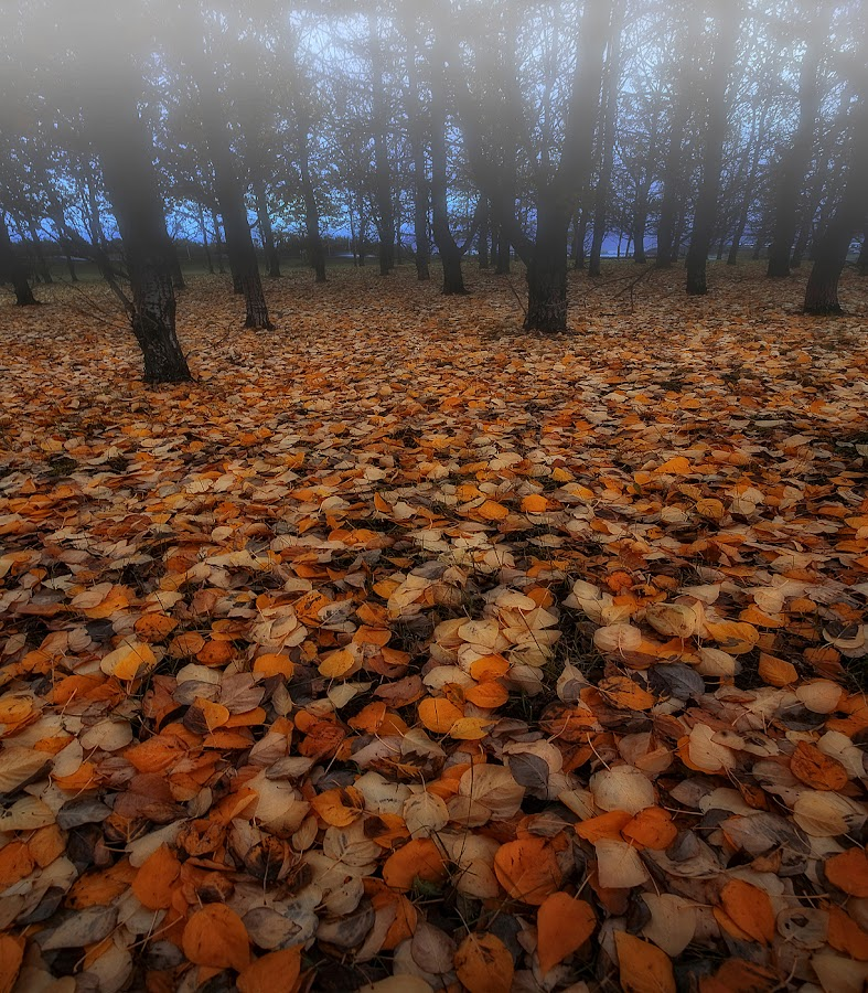 Leaves by Þorsteinn H. Ingibergsson - Landscapes Forests ( pwcautumn_dq )