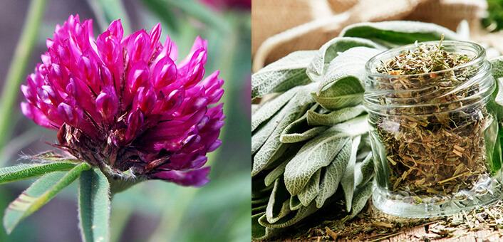 Fight Menopause Symptoms With Red Clover And Sage