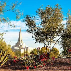 Temple through the Trees by LaDawn Park - Buildings & Architecture Places of Worship (  )