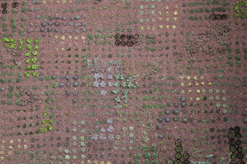 Plantas suculentas en cubiertas vegetales