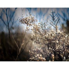 Spring rising! by Marko Icelic - Flowers Flowers in the Wild ( old, 44m-4, helios, enjoy, lens, digital, photography, dslr, manual, winter, february, russian, sunny, m42, focus, day )