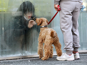 Photo: A girl who has been isolated at a makeshift facility to screen, cleanse and isolate people with high radiation levels, looks at her dog through a window in Nihonmatsu, northern Japan, March 14, 2011, after a massive earthquake and tsunami that are feared to have killed more than 10,000 people.      REUTERS/Yuriko Nakao (JAPAN - Tags: DISASTER ANIMALS IMAGES OF THE DAY)