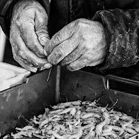 mani di pescatore
