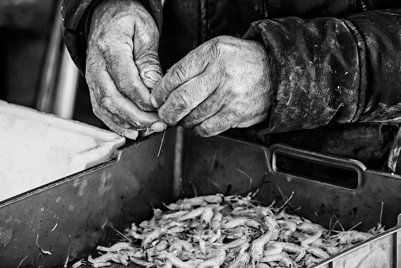 mani di pescatore di zucco