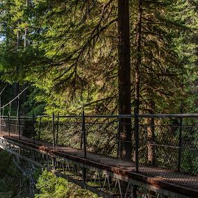Drift Creek Falls Suspension Bridge by Craig Pifer - Buildings & Architecture Bridges & Suspended Structures ( oregon, suspension bridge, drift creek, forest, bridge )