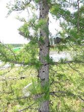 Photo: Бутылочное дерево.