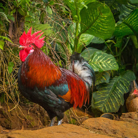 Hawaiian Rooster & Hen by Kathy Suttles - Artistic Objects Other Objects (  )