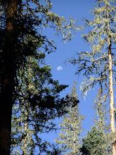 Photo: Moon through the trees