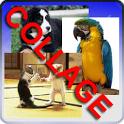 Collage Widget icon