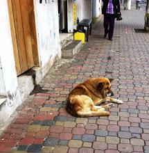 Photo: This guy was in pretty bad shape.  :(. Baños, Ecuador.  June 2012.