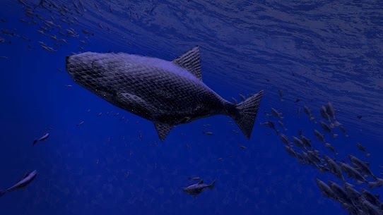 Be a Fish – VR Simulator 4