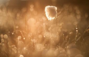 Photo: Le Coton des montagnes