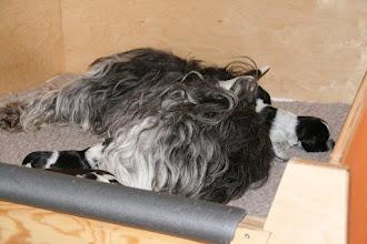 Photo: und Mama Cini wird schon mal gern als 'Turn-Objekt' verwendet (Klettermeister Ellie)