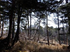 尾根沿いは倒木帯