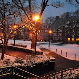 Brooklyn college  by Morris Cooper - City,  Street & Park  Skylines