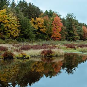 by Dave Bradley - Landscapes Forests