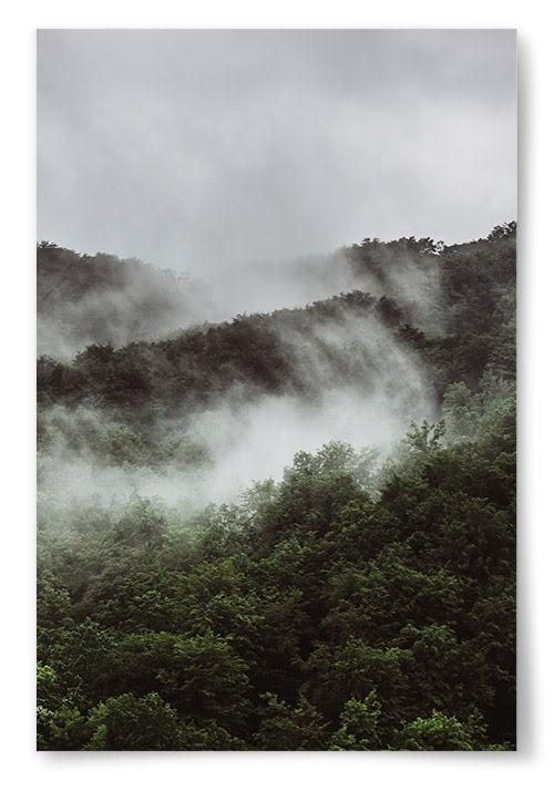 Poster Grön Skog med Dimma