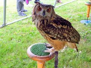 Photo: de vogelshow