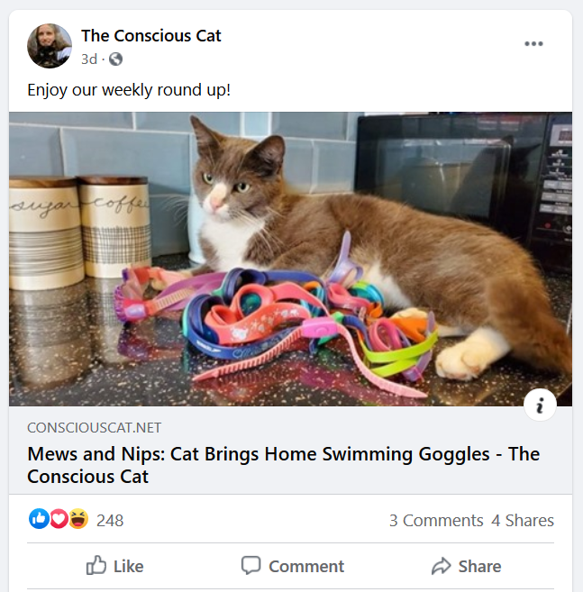 the-conscious-cat-facebook-post