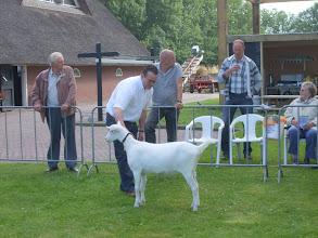 Photo: Rubriek 5: witte lammeren geboren in januari 2012. 1c. Lieke van de Dijk van A. Lambregts,