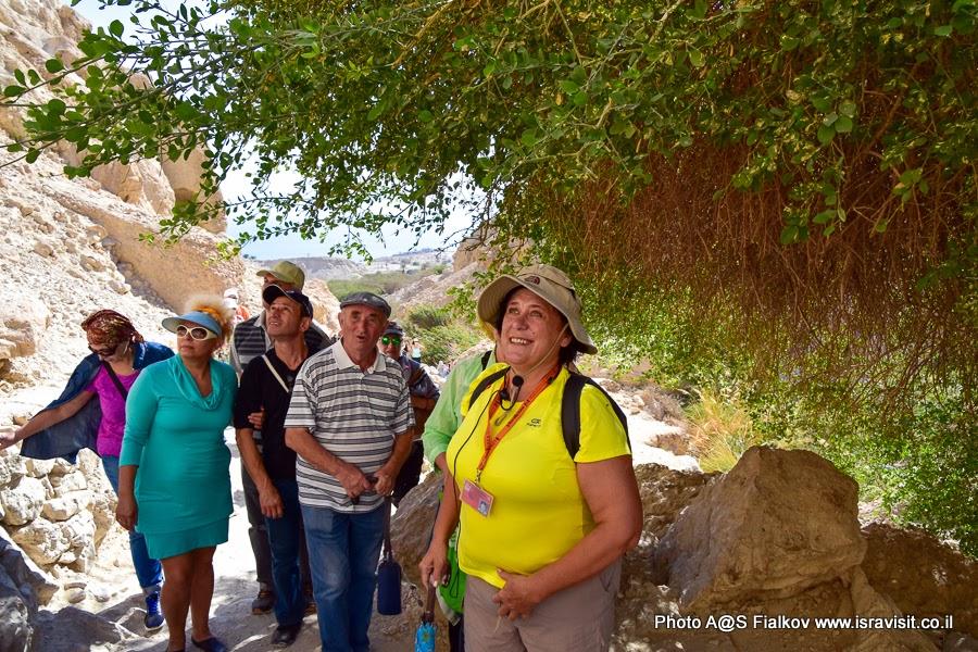 Гид по Израилю Светлана Фиалкова с экскурсией в заповеднике Эйн-Геди.