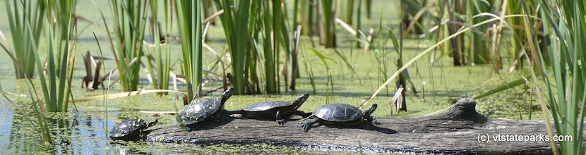 Photo: Turtles sunning themselves at Alburg Dunes State Park