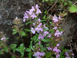 Photo: 丸沼高原山麓駅で咲いていました。