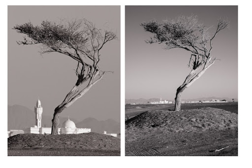 Pic(k) of the week 15: THE CROOKED TREE - a lesson in lens compression