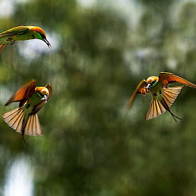 Hunting by Thảo Nguyễn Đắc - Animals Birds ( bird, hunting )