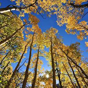 Colorado Fall by Eric Abbott - Landscapes Mountains & Hills