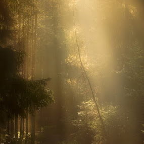 My favorite path by Marie Gillander - Landscapes Forests