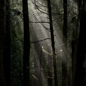 Ray of Light by Brian Stout - Landscapes Forests ( #GARYFONGDRAMATICLIGHT, #WTFBOBDAVIS )