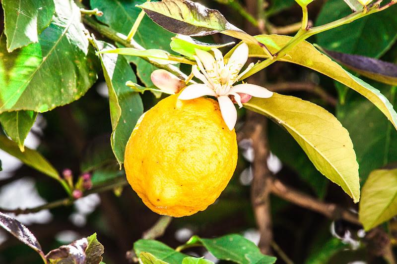 il frutto e il fiore di dario toccafondo