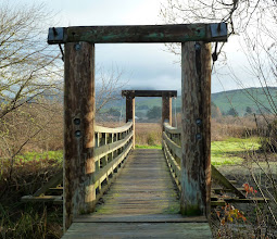 Photo: Bridge, base of Tomales Bay