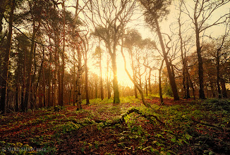 Photo: Light From The Dark  There are time when you are out and about in the forest when you feel like the only man alive, its dark when you arrive and you wait fro the sunrise and when it breeches the horizon its as if you are seeing the first day. As the light streams through the forest, casting shadows from the trees and it slowly burns off that morning mist does it fill your day.  Being alone is not such a bad thing, being silent and peace with who and where you are at times like these cannot be bought, we sometimes forget what we have around us, what is there to lift the soul.