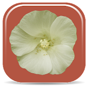 App Icon for Rare Plants of the Pilbara App in Czech Republic Google Play Store