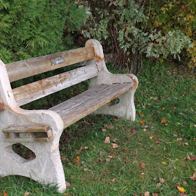Bench by Barbara Storey - City,  Street & Park  City Parks ( small town, park, bench, autumn, grass, leaves )