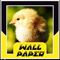 Chicken Wallpaper HD icon