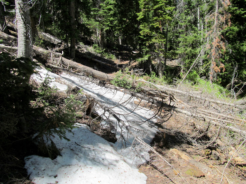 Photo: Fallen trees and snow on the trail