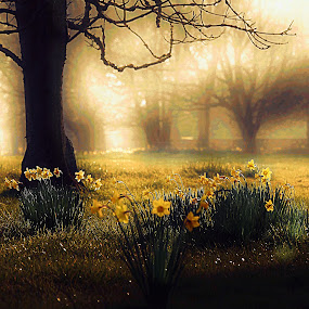 SPRING MIST by Stewart JOHN Lobb - Landscapes Prairies, Meadows & Fields ( stewart, lobb, spring colorful flowers, hdr, sun coming through wildflowers, meadow, trees, daffodils, landscapes, mist )