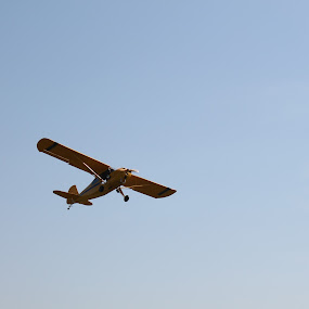 flyin in the sky by Lina Turoci - Transportation Airplanes ( flying, sky, plan, cub )