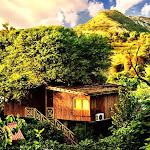 Best Tree House in  Jaipur | Tree House Resort Jaipur