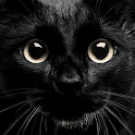 My Kitten (Black Outfit) icon