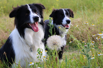 Photo: Duke und Halbbruder Earl (5 Monate)