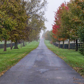 November Rain by Jim Dawson - Novices Only Landscapes ( fall. colors. rain. water. driveway. )