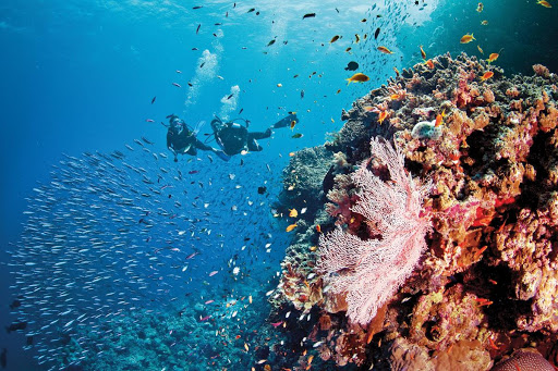 Great-Barrier-Reef-scuba.jpg - Silversea Expeditions' Scuba Diving Expedition Voyages take place in top diving sites, such as Australia's Great Barrier Reef.
