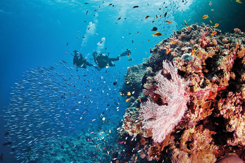 Silversea Expeditions' Scuba Diving Expedition Voyages take place in top diving sites, such as Australia's Great Barrier Reef.