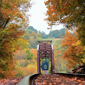 Looking For Fall by Wesley Nesbitt - Transportation Railway Tracks ( fall colors, fall, nature, metal, train tracks, wood )