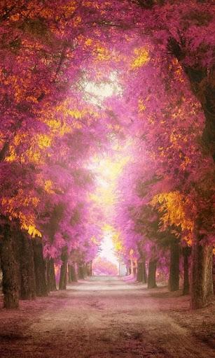 秋の無料壁紙