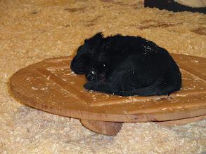 Photo: beim Spielen eingeschlafen